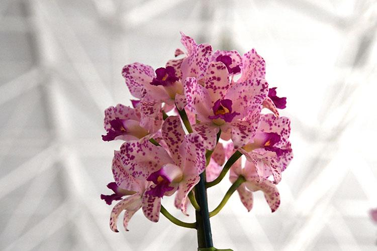orquideas-marcelo-3