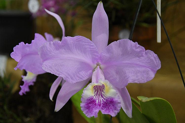 orquideas-marcelo-4
