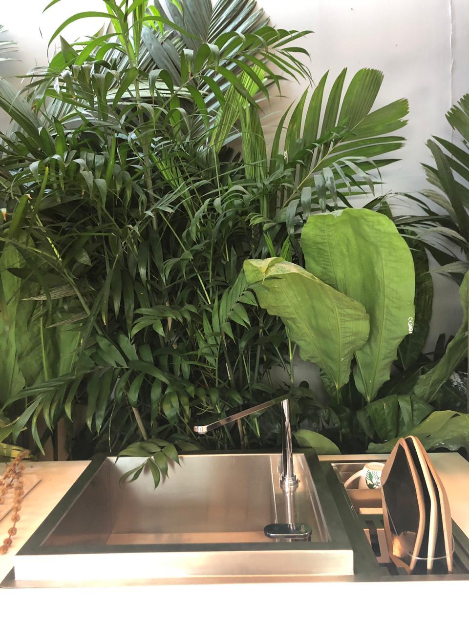 planta-no-banheiro