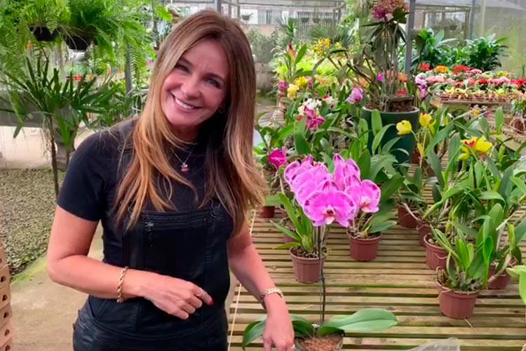 Imagem: Aprenda a fazer um arranjo de orquídea para enfeitar a sua casa