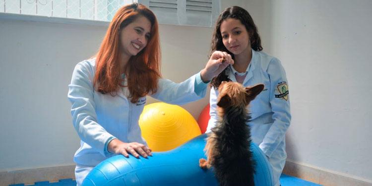 Imagem: SemperVet: Quando seu pet precisa de reabilitação para se recuperar