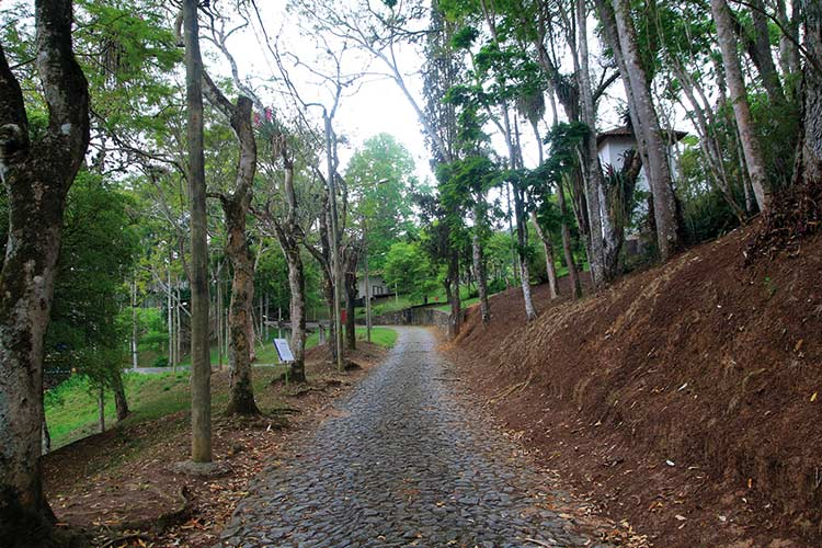 jardim-botanico-by-fernando-priamo11