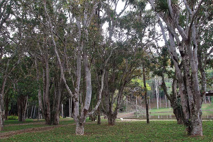 jardim-botanico-by-fernando-priamo6